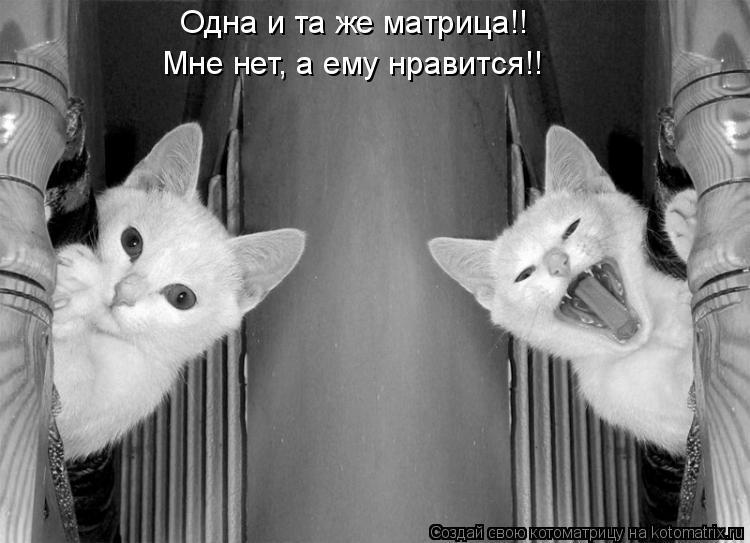 Котоматрица: Одна и та же матрица!! Мне нет, а ему нравится!!
