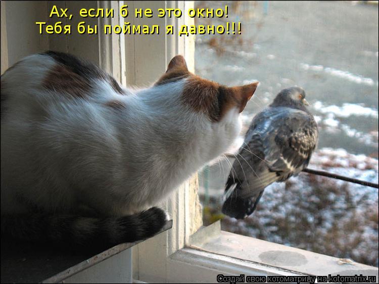 Котоматрица: Ах, если б не это окно! Тебя бы поймал я давно!!!