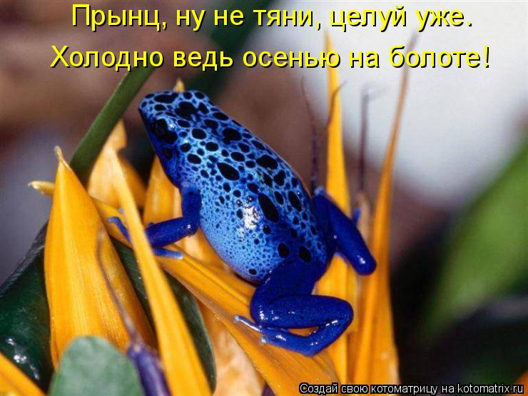 Котоматрица: Прынц, ну не тяни, целуй уже. Холодно ведь осенью на болоте!