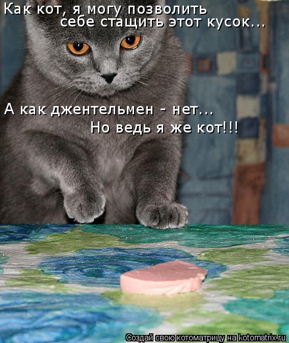 Котоматрица: Как кот, я могу позволить  себе стащить этот кусок... А как джентельмен - нет... Но ведь я же кот!!!