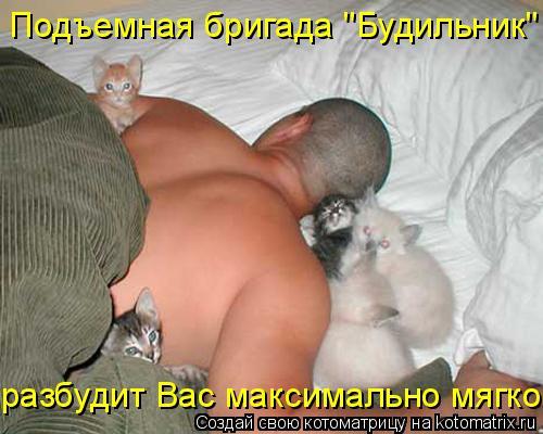 """Котоматрица: Подъемная бригада """"Будильник"""" разбудит Вас максимально мягко."""