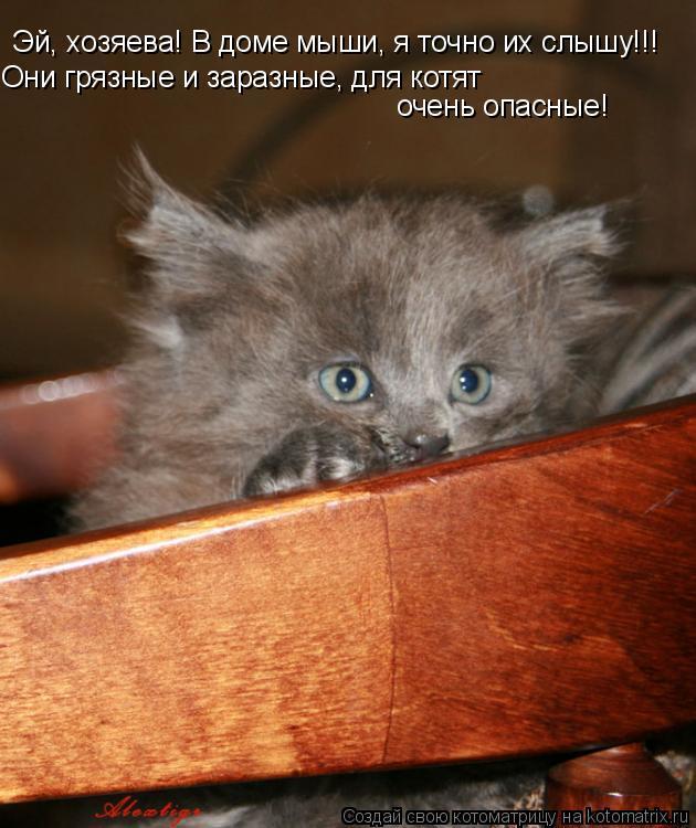 Котоматрица: Эй, хозяева! В доме мыши, я точно их слышу!!! Они грязные и заразные, для котят  очень опасные!