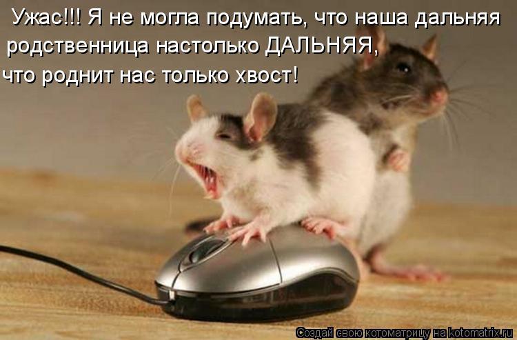Котоматрица: Ужас!!! Я не могла подумать, что наша дальняя родственница настолько ДАЛЬНЯЯ, что роднит нас только хвост!