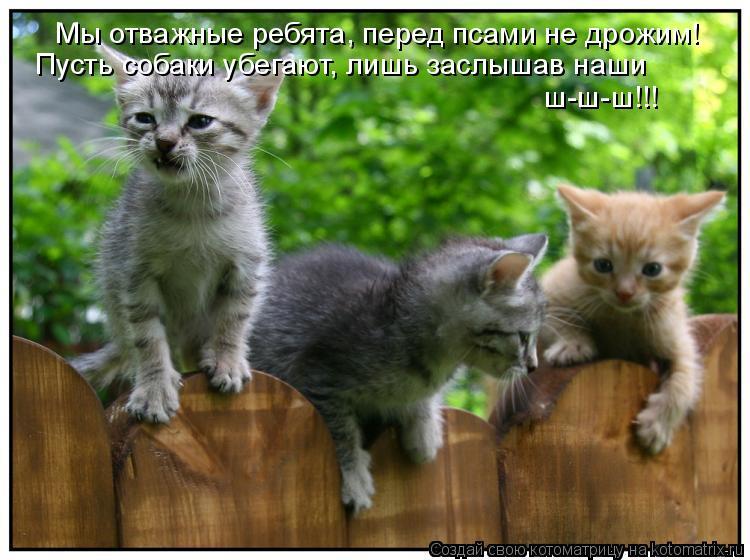 Котоматрица: Мы отважные ребята, перед псами не дрожим! Пусть собаки убегают, лишь заслышав наши  ш-ш-ш!!!