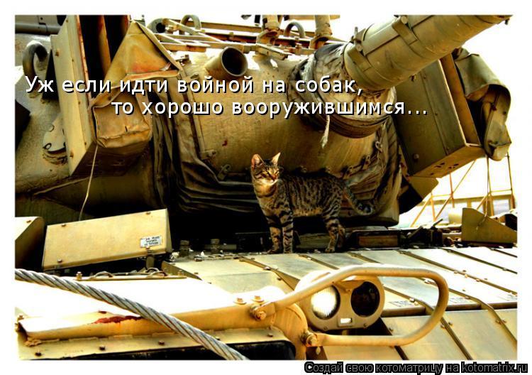 Котоматрица: Уж если идти войной на собак,  то хорошо вооружившимся...