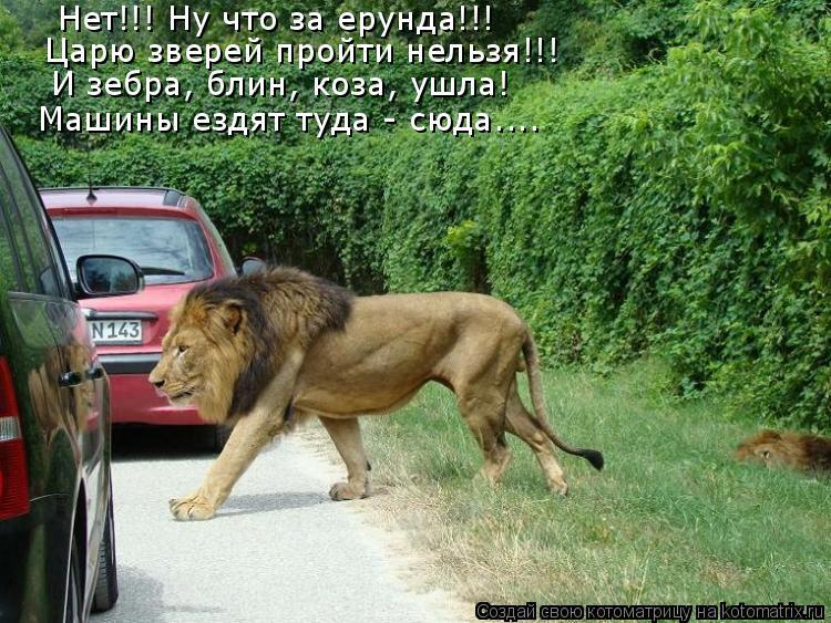 Котоматрица: Нет!!! Ну что за ерунда!!!  Царю зверей пройти нельзя!!! И зебра, блин, коза, ушла! Машины ездят туда - сюда....