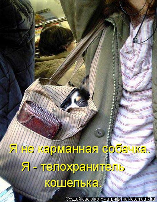 Котоматрица: Я не карманная собачка. Я - телохранитель  кошелька.