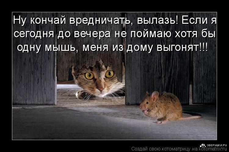 Котоматрица: Ну кончай вредничать, вылазь! Если я  сегодня до вечера не поймаю хотя бы  одну мышь, меня из дому выгонят!!!