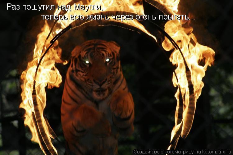 Котоматрица: Раз пошутил над Маугли,  теперь всю жизнь через огонь прыгать...