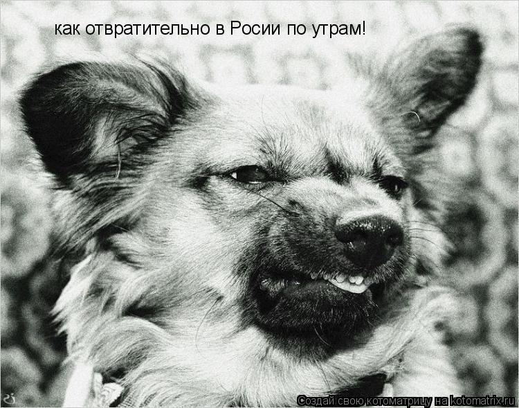 Котоматрица: как отвратительно в Росии по утрам!