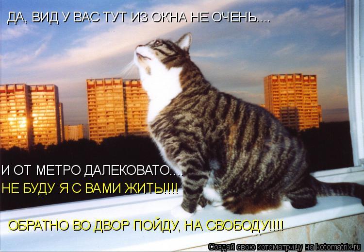 Котоматрица: ДА, ВИД У ВАС ТУТ ИЗ ОКНА НЕ ОЧЕНЬ.... И ОТ МЕТРО ДАЛЕКОВАТО.... НЕ БУДУ Я С ВАМИ ЖИТЬ!!!! ОБРАТНО ВО ДВОР ПОЙДУ, НА СВОБОДУ!!!!