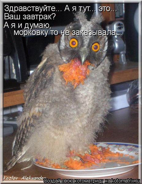 Котоматрица: Здравствуйте... А я тут... это... Ваш завтрак?  А я и думаю,  морковку то не заказывала...