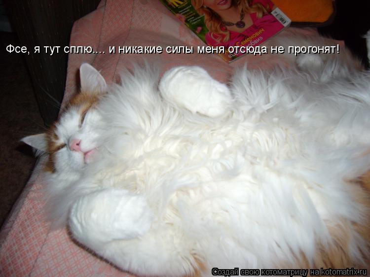Котоматрица: Фсе, я тут сплю.... и никакие силы меня отсюда не прогонят!