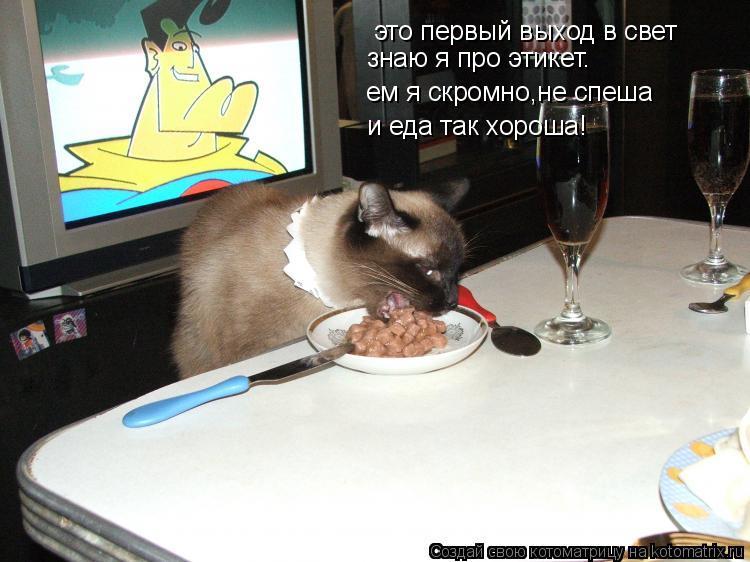 Котоматрица: это первый выход в свет ем я скромно,не спеша и еда так хороша! знаю я про этикет.