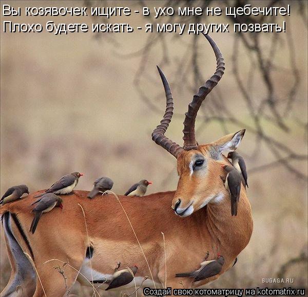 Котоматрица: Вы козявочек ищите - в ухо мне не щебечите! Плохо будете искать - я могу других позвать!
