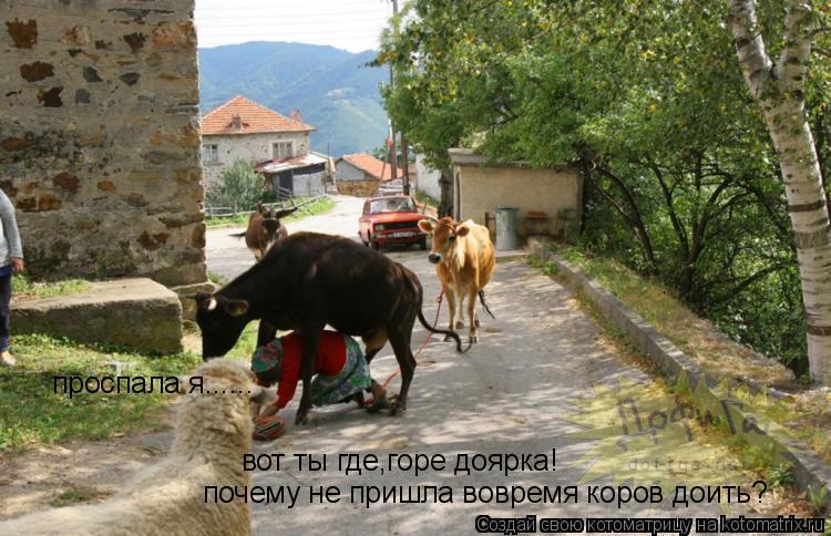 Котоматрица: вот ты где,горе доярка! почему не пришла вовремя коров доить? проспала я......