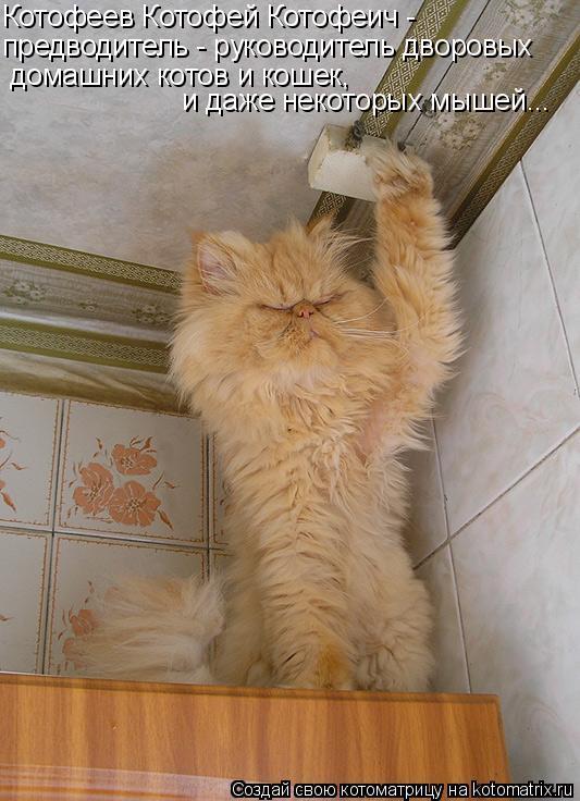 Котоматрица: Котофеев Котофей Котофеич -  предводитель - руководитель дворовых  домашних котов и кошек,  и даже некоторых мышей...