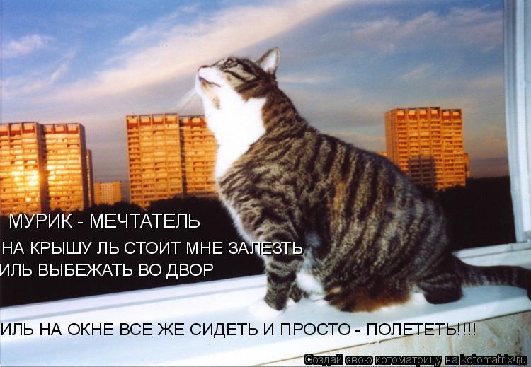 Котоматрица: МУРИК - МЕЧТАТЕЛЬ НА КРЫШУ ЛЬ СТОИТ МНЕ ЗАЛЕЗТЬ ИЛЬ ВЫБЕЖАТЬ ВО ДВОР ИЛЬ НА ОКНЕ ВСЕ ЖЕ СИДЕТЬ И ПРОСТО - ПОЛЕТЕТЬ!!!!