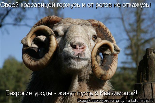 Котоматрица: Своей красавицей горжусь и от рогов не откажусь! Безрогие уроды - живут пусть с Квазимодой!
