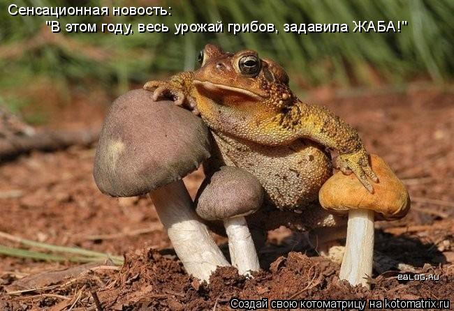 """Котоматрица: Сенсационная новость:  """"В этом году, весь урожай грибов, задавила ЖАБА!"""""""