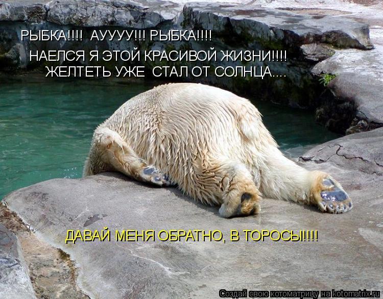 Котоматрица: РЫБКА!!!!  АУУУУ!!! РЫБКА!!!! НАЕЛСЯ Я ЭТОЙ КРАСИВОЙ ЖИЗНИ!!!! ЖЕЛТЕТЬ УЖЕ  СТАЛ ОТ СОЛНЦА.... ДАВАЙ МЕНЯ ОБРАТНО, В ТОРОСЫ!!!!