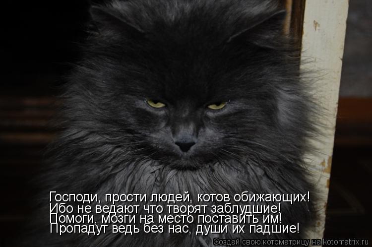 Котоматрица: Господи, прости людей, котов обижающих! Ибо не ведают что творят заблудшие! Помоги, мозги на место поставить им! Пропадут ведь без нас, души и
