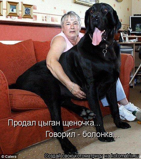 Котоматрица: Продал цыган щеночка...  Говорил - болонка...
