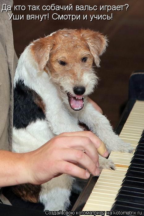 Котоматрица: Да кто так собачий вальс играет?  Уши вянут! Смотри и учись!