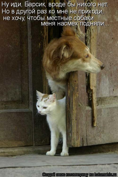Котоматрица: Ну иди, Барсик, вроде бы никого нет.  Но в другой раз ко мне не приходи,  не хочу, чтобы местные собаки  меня насмех подняли...