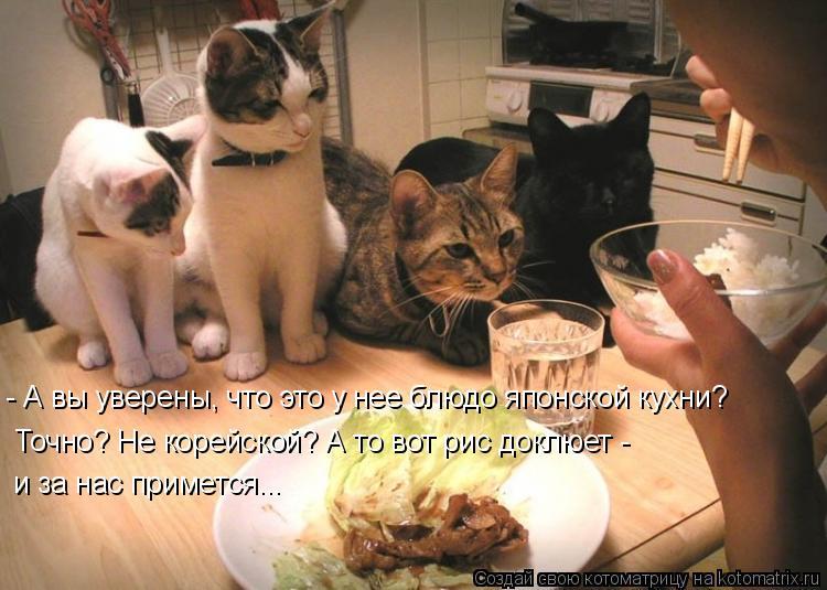 Котоматрица: - А вы уверены, что это у нее блюдо японской кухни? Точно? Не корейской? А то вот рис доклюет - и за нас примется...