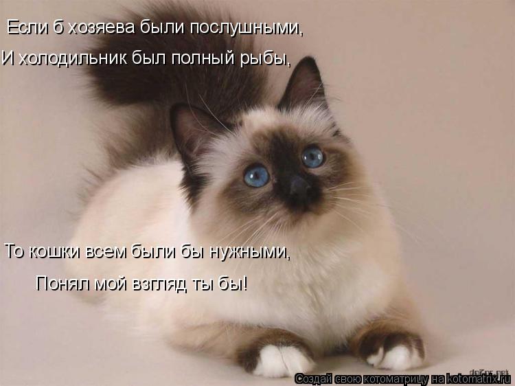Котоматрица: Если б хозяева были послушными, И холодильник был полный рыбы, То кошки всем были бы нужными, Понял мой взгляд ты бы!