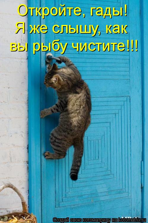 Котоматрица: Откройте, гады! Я же слышу, как  вы рыбу чистите!!!