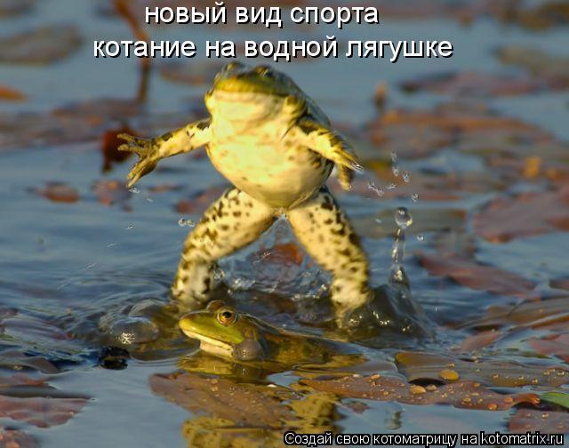 Котоматрица: новый вид спорта  котание на водной лягушке