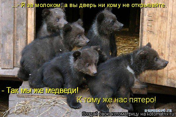 Котоматрица: ...- Я за молоком, а вы дверь ни кому не открывайте. - Так мы же медведи! - Так мы же медведи! К тому же нас пятеро!