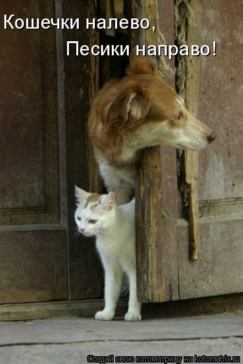 Котоматрица: Кошечки налево, Песики направо!