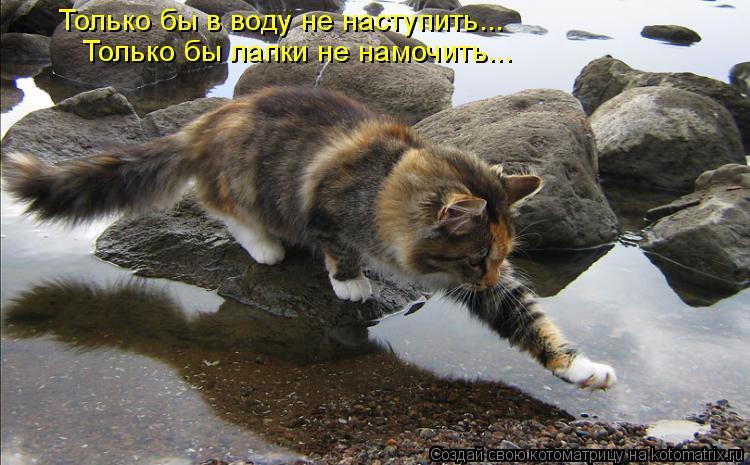 Котоматрица: Только бы в воду не наступить... Только бы лапки не намочить...