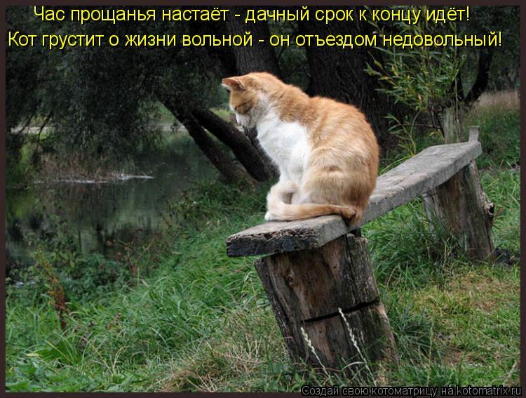 Котоматрица: Час прощанья настаёт - дачный срок к концу идёт! Кот грустит о жизни вольной - он отъездом недовольный!