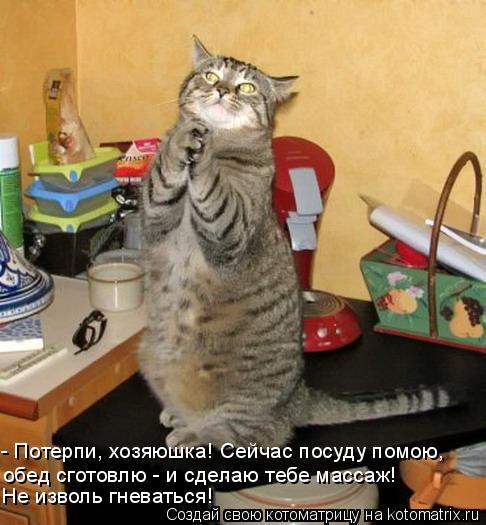 Котоматрица: - Потерпи, хозяюшка! Сейчас посуду помою, обед сготовлю - и сделаю тебе массаж! Не изволь гневаться!