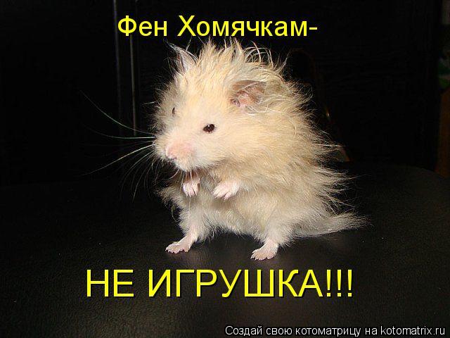 Котоматрица: Фен Хомячкам- НЕ ИГРУШКА!!!