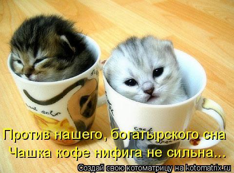 Котоматрица: Против нашего, богатырского сна Чашка кофе нифига не сильна...