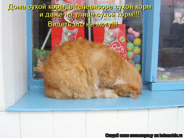 Котоматрица: Дома сухой корм, в телевизоре сухой корм  и даже на улице сухой корм!!! Видеть его не могу!!!