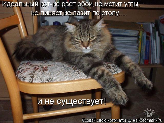 Котоматрица: Идеальный кот-не рвет обои,не метит углы, не линяет,не лазит по столу..... и не существует!