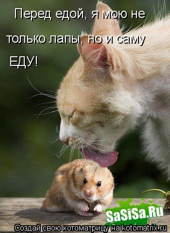 Котоматрица: Перед едой, я мою не только лапы, но и саму ЕДУ!