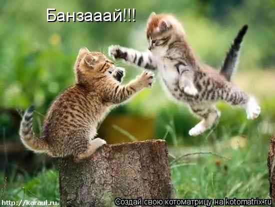 Котоматрица: Банзааай!!!