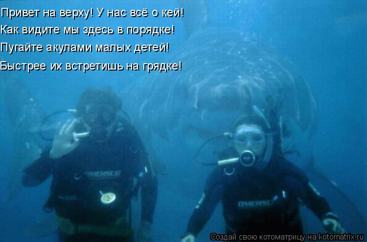 Котоматрица: Привет на верху! У нас всё о кей! Как видите мы здесь в порядке! Пугайте акулами малых детей! Быстрее их встретишь на грядке!