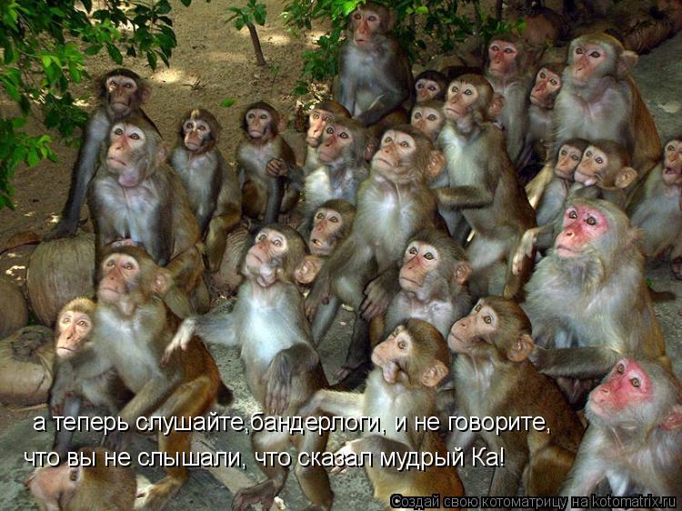 Котоматрица: а теперь слушайте,бандерлоги, и не говорите, что вы не слышали, что сказал мудрый Ка!