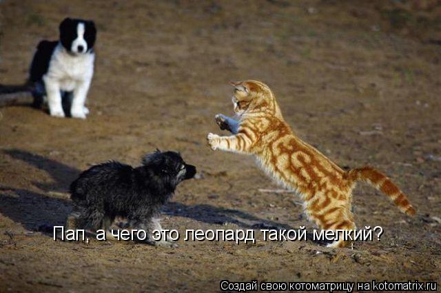 Котоматрица: Пап, а чего это леопард такой мелкий? Пап, а чего это леопард такой мелкий?