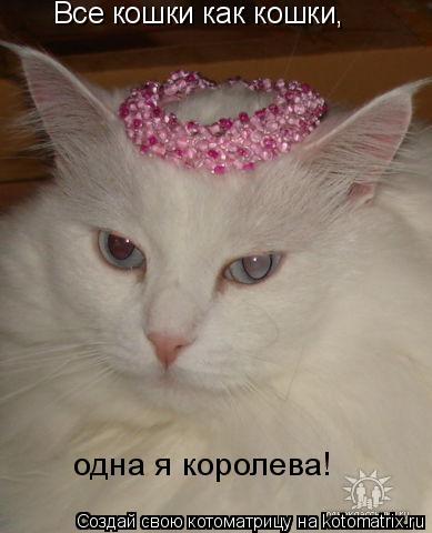 Котоматрица: Все кошки как кошки, одна я королева!
