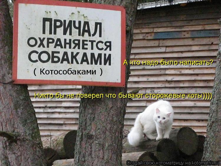 Котоматрица: А что надо было написать? Никто бы не поверел что бывают сторожевые коты)))) ( Котособаками )