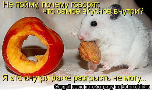 Котоматрица: Не пойму, почему говорят,  что самое вкусное внутри? Я это внутри даже разгрызть не могу...